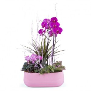Kwiaty- orchidea doniczkowa