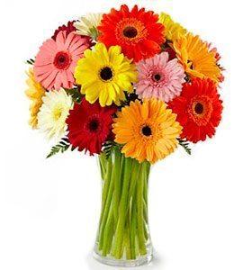 Kwiaty- Bukiet Gerber