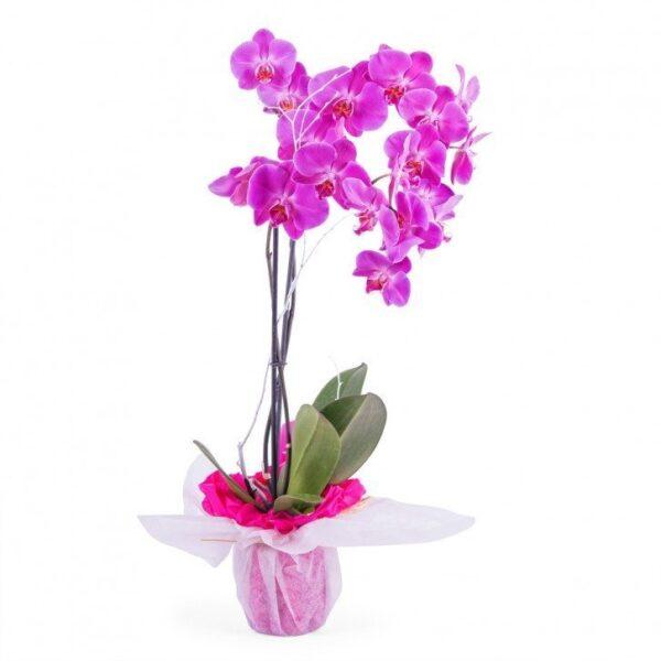 Kwiaty- orchidea