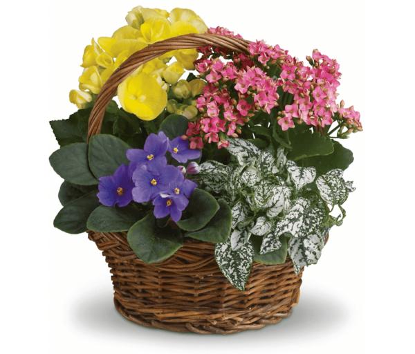 Kosze kwiatowe- Kosz Kwiatowa Rozmaitość