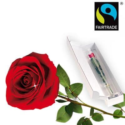 Zagranica- Pojedyncza czerwona róża