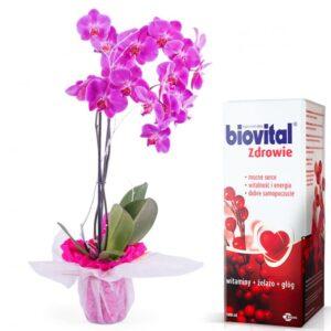 Kwiaty doniczkowe Dzień Babci- Kwiat Doniczkowy Orchidea II- pęd Różowy Dla Babci