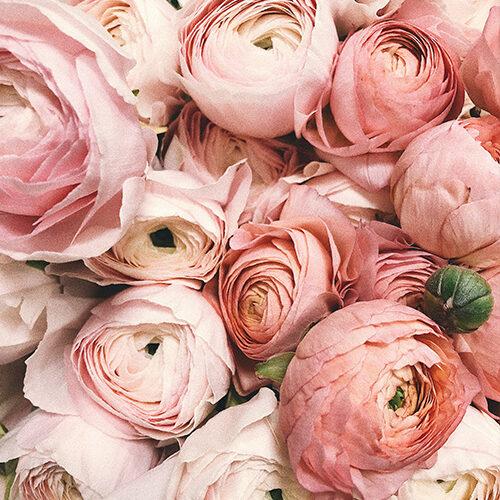 twoje_kwiaty