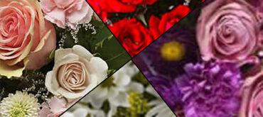 kreator kwiatow