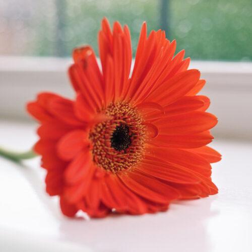 kwiat na dzień matki