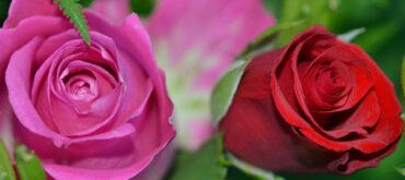 kwiaty dzien matki